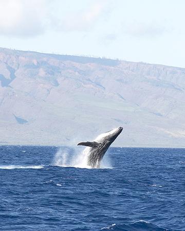 Whale269